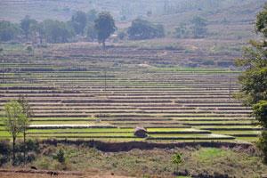 Поле разделено на бесчисленные рисовые участки