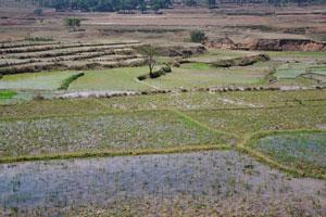 Различные уровни рисовых полей затоплены водой
