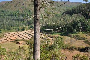 Поля сменяются лесами