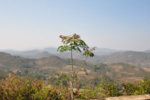 Многочисленные холмы долины