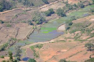 Затопленные плантации обеспечивают идеальные условия для выращивания риса