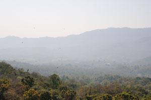 Над долиной Араку летают птицы