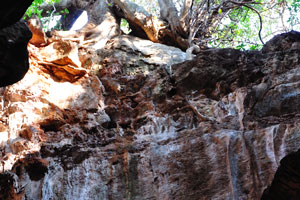 Дерево растёт около верхнего отверстия пещеры