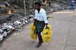 Эти ветви полны бананов