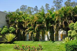 Зелёный газон с пальмами