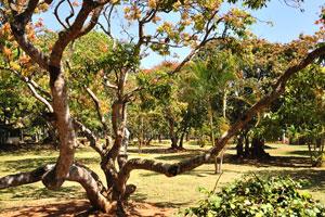 Низкое дерево раскинуло свои ветви во все стороны