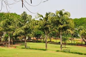 Экзотические деревья в парке