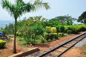 Королевская пальма посажена в начале круговой железной дороги