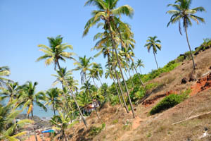Крутой утёс с пальмами