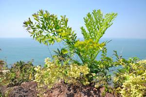 Странное растение на вершине утёса