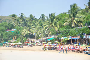 Взрослые пальмы на пляже