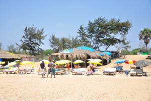 Пляжный шек Бонго