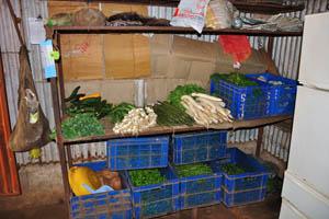 Огромный ассортимент зелёных овощей