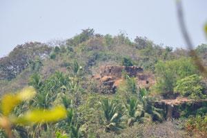 Форт полон кокосовых пальм