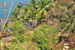 Кокосовые пальмы на северной стороне форта