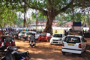 Огромное дерево баньяна рядом с футбольным стадионом