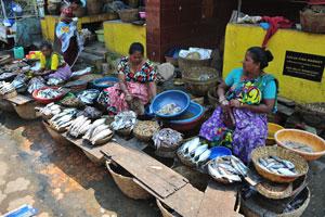 Рыбный рынок в Колве