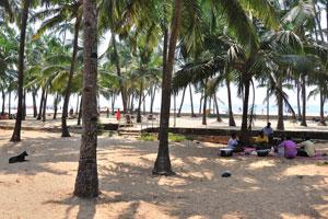 Место для пикника под пальмами рядом с пляжем
