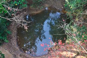 Небольшой бассейн питьевой воды для животных