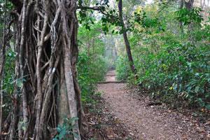 Путь к домику на вершине дерева