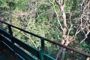 Граница смотровой башни на вершине дерева