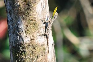 Маленькая ящерица с жёлтым горлом