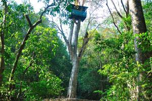 Смотровая башня на вершине дерева издалека