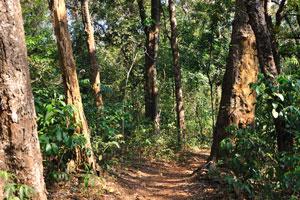 Путь в дремучем индийском лесу