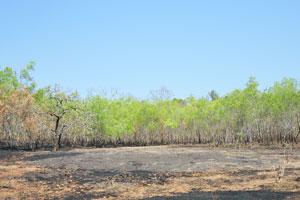 Земля чёрного цвета после пожара