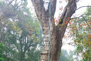 Пролёт лестницы ведёт к домику на вершине дерева