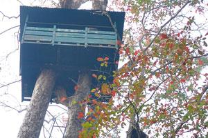 Я немного боялся лезть к домику на вершине дерева