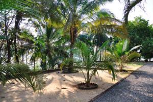 Двор украшен различными пальмами
