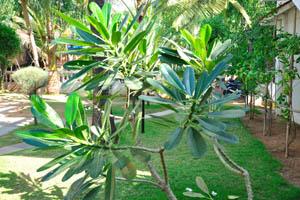 Зелёный двор пляжного дома отдыха Мандрем