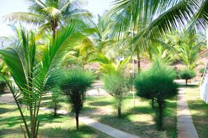 Пушистые деревья растут в зелёном дворе пляжного дома отдыха Мандрем