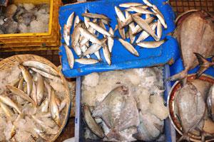 Рыбный рынок: рыба небольших размеров