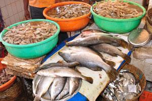 Рыбный рынок: серый окунь и креветки