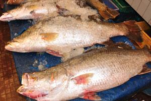 Рыбный рынок: большая рыба с большой чешуёй