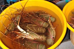 Рыбный рынок: продавец омаров