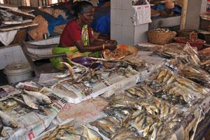 Рынок возле автовокзала Кадамба: нужно поместить эту сушёную рыбу в ёмкость с водой перед жаркой