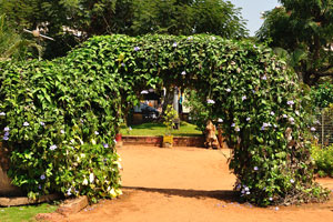 Городской сад Маргао: арка сделана из пышной зелени