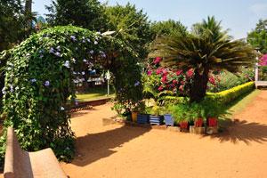 Городской сад Маргао: Саговник поникающий возле садовой арки