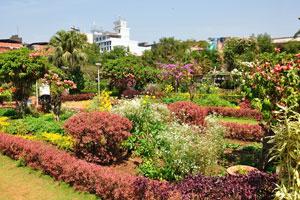 Городской сад Маргао: ландшафтные кусты бордового цвета