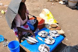 Старый рыбный рынок: это не хорошая идея продавать рыбу под прямыми солнечными лучами