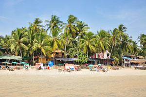 Кокосовые пальмы нависают над баром и рестораном Пресли