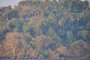 Чаща острова Канкон
