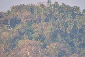 Кокосовые пальмы на острове Канкон