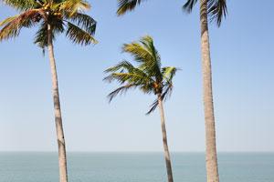 Сквозь кокосовые пальмы виден горизонт Аравийского моря