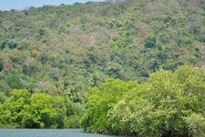 Склон холма возле озера полон деревьев