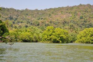 Индийский озеро возле пляжа Палолем кишит крабами