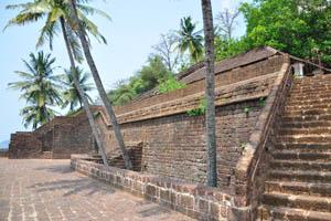 Кокосовые пальмы растут из среды форта
